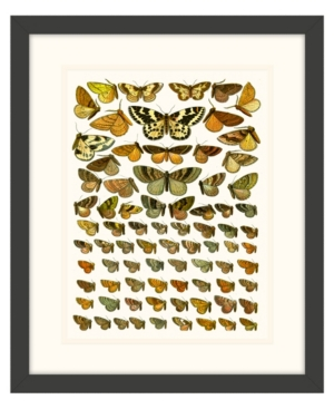 Butterfly Charts Iii Framed Giclee Wall Art - 15