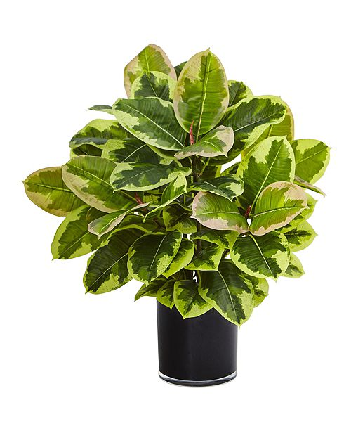 Nearly Natural Artificial Rubber Plant in Glossy Cylinder - Real Touch