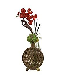 Orchid, Succulent Sunrise Arrangement