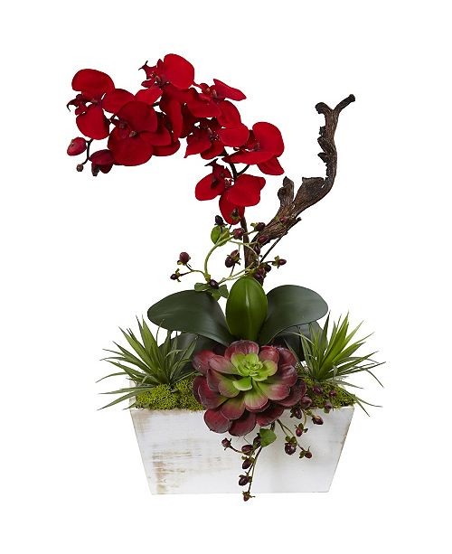 Nearly Natural Seasonal Orchid and Succulent Garden with White Wash Planter