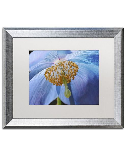 "Trademark Global Cora Niele 'Blue Poppy' Matted Framed Art - 20"" x 16"" x 0.5"""