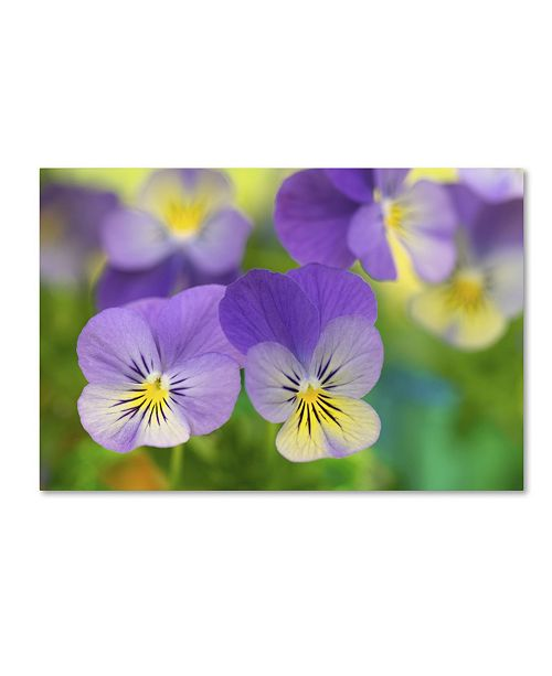 "Trademark Global Cora Niele 'Violets' Canvas Art - 24"" x 16"" x 2"""