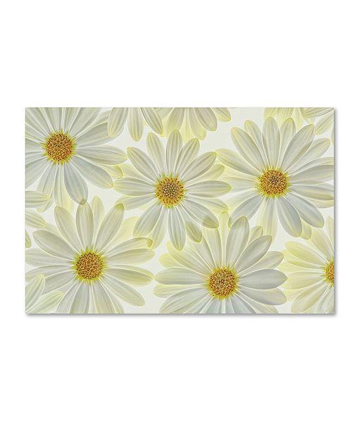 "Trademark Global Cora Niele 'Daisy Flowers' Canvas Art - 47"" x 30"" x 2"""