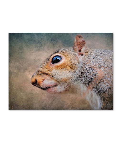 "Trademark Global Jai Johnson 'Gray Squirrel Portrait' Canvas Art - 19"" x 14"" x 2"""