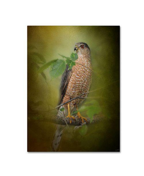 """Trademark Global Jai Johnson 'Sharp Shinned Hawk' Canvas Art - 19"""" x 14"""" x 2"""""""