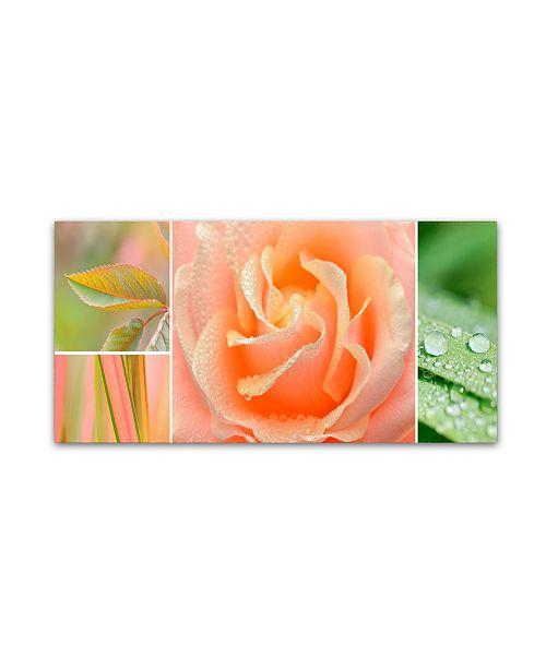 "Trademark Global Cora Niele 'The Apricot Garden' Canvas Art - 10"" x 19"" x 2"""