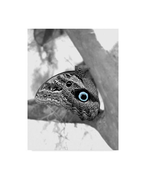 "Trademark Global Dana Brett Munach 'Defense' Canvas Art - 24"" x 18"" x 2"""