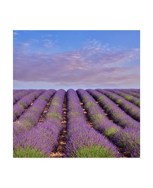 "Trademark Global Cora Niele 'Lavender Hill' Canvas Art - 14"" x 14"" x 2"""