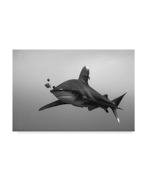 "Trademark Global Csaba Tokolyi 'Longimanus' Canvas Art - 19"" x 2"" x 12"""