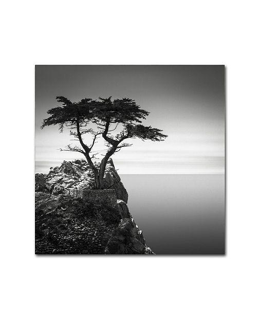 "Trademark Global Dave MacVicar 'The Lone Cypress' Canvas Art - 35"" x 35"" x 2"""