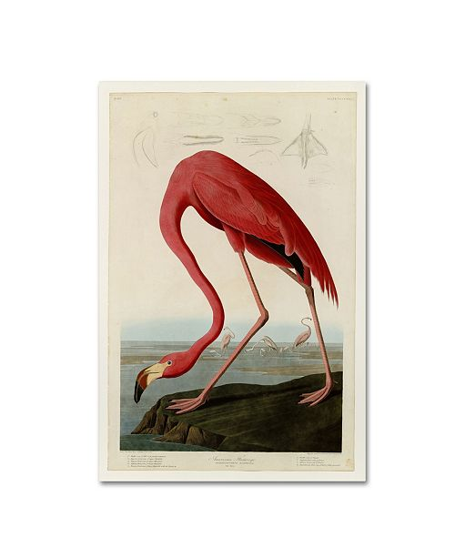 "Trademark Global John James Audobon 'American Flamingo' Canvas Art - 19"" x 12"" x 2"""