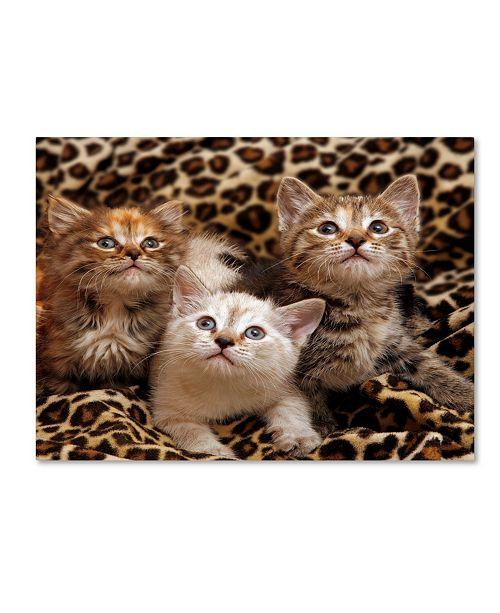 "Trademark Global Mike Jones Photo 'Kittens 3' Canvas Art - 24"" x 18"" x 2"""