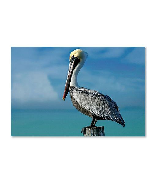 "Trademark Global Mike Jones Photo 'Pelican' Canvas Art - 24"" x 16"" x 2"""