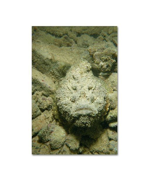 "Trademark Global Robert Harding Picture Library 'Stonefish' Canvas Art - 19"" x 12"" x 2"""