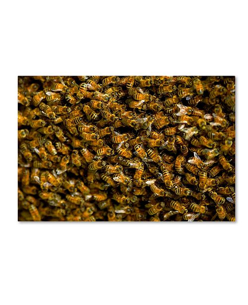 "Trademark Global Robert Harding Picture Library 'Bee Pattern' Canvas Art - 19"" x 12"" x 2"""