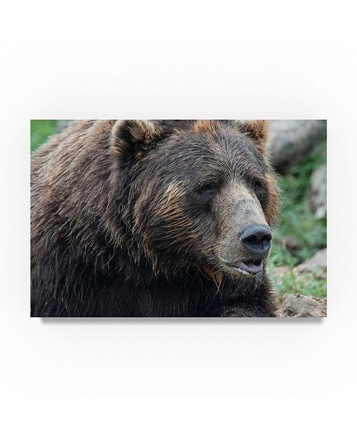 """Trademark Global Robert Michaud 'Brown Bear Center' Canvas Art - 32"""" x 22"""" x 2"""""""