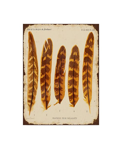 """Trademark Global Jean Plout 'Vintage Feather Study' Canvas Art - 24"""" x 18"""" x 2"""""""
