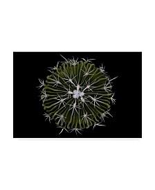 "Victor Mozqueda 'Steno Cactus' Canvas Art - 32"" x 2"" x 22"""