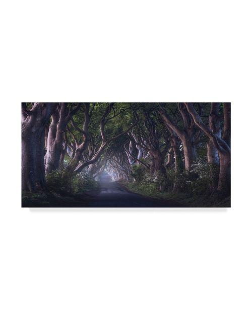 "Trademark Global Daniel F. 'The Dark Hedges' Canvas Art - 10"" x 19"" x 2"""