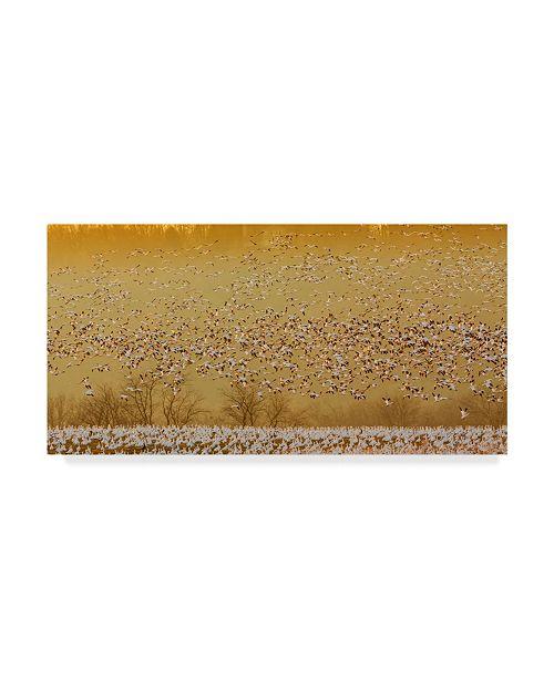 "Trademark Global David Hua 'In The Magic Golden Would' Canvas Art - 10"" x 19"" x 2"""