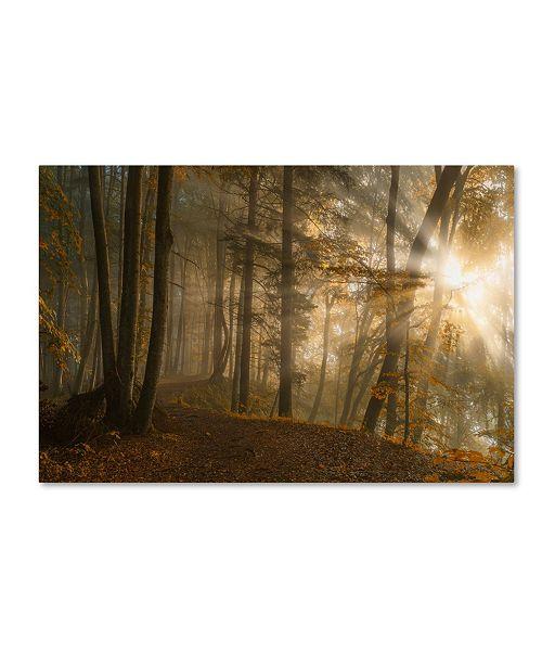 """Trademark Innovations Norbert Maier 'Forest Light' Canvas Art - 47"""" x 30"""" x 2"""""""