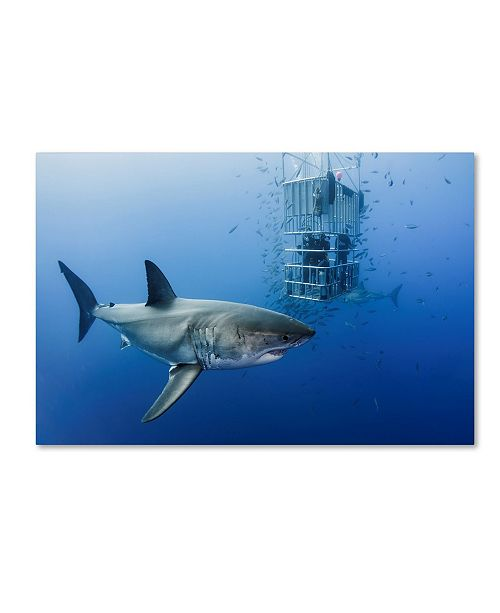 "Trademark Global Davide Lopresti 'Animals In Cage' Canvas Art - 47"" x 30"" x 2"""