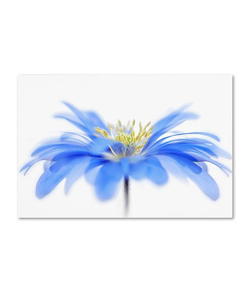 "Trademark Global Jacky Parker 'Floral Fountain' Canvas Art - 19"" x 12"" x 2"""