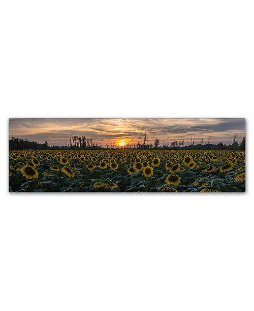"""Trademark Global Kurt Shaffer 'Sunset Sunflowers 2' Canvas Art - 10"""" x 32"""""""