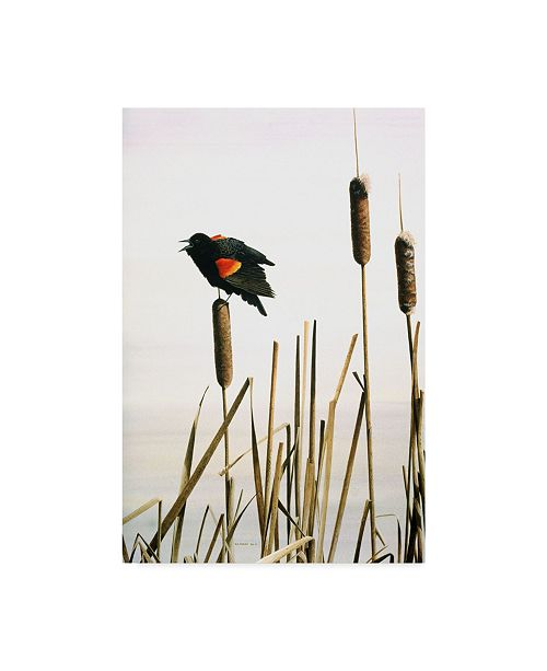 "Trademark Global Ron Parker 'Early Arrival Red Winged Blackbird' Canvas Art - 16"" x 24"""