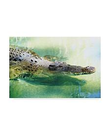 """Incredi 'Alligator In Water' Canvas Art - 19"""" x 12"""""""