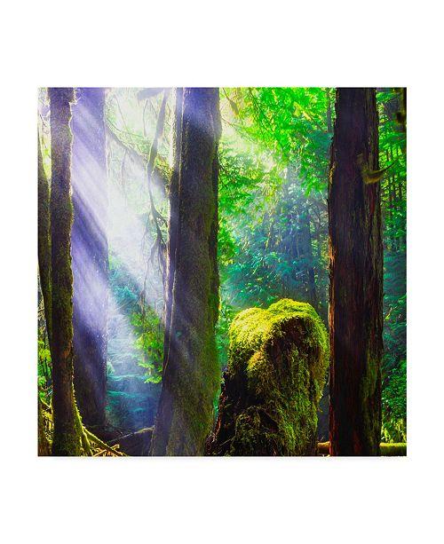 "Trademark Global Jason Matias 'Forest Light Square' Canvas Art - 18"" x 18"""
