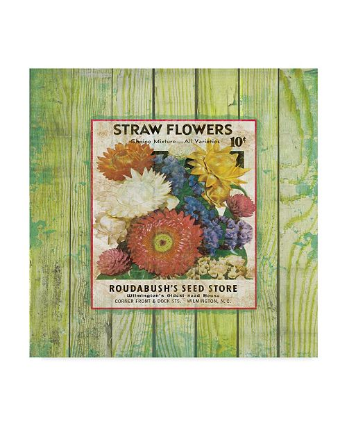 """Trademark Global Jean Plout 'Straw Flowers On Wood 3' Canvas Art - 24"""" x 24"""""""