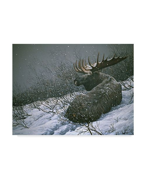"""Trademark Global Ron Parker 'Moose In The Brush' Canvas Art - 35"""" x 47"""""""
