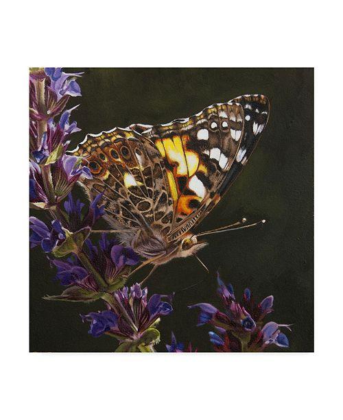 "Trademark Global Rusty Frentner 'Yellow Butterfly' Canvas Art - 35"" x 35"""
