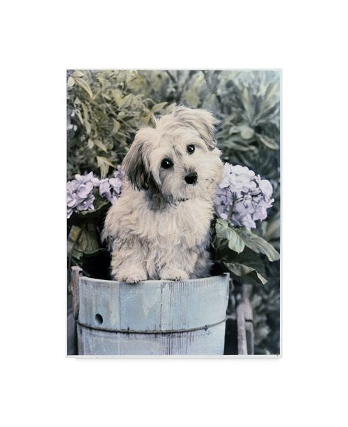 "Trademark Global Sharon Forbes 'Little Fuzz' Canvas Art - 35"" x 47"""