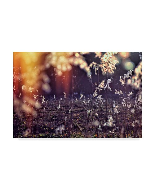 "Trademark Global Incredi 'White Floral' Canvas Art - 47"" x 30"""