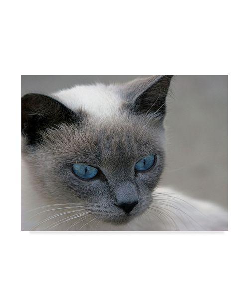 "Trademark Global J.D. Mcfarlan 'Blue Eyes Gray' Canvas Art - 32"" x 24"""