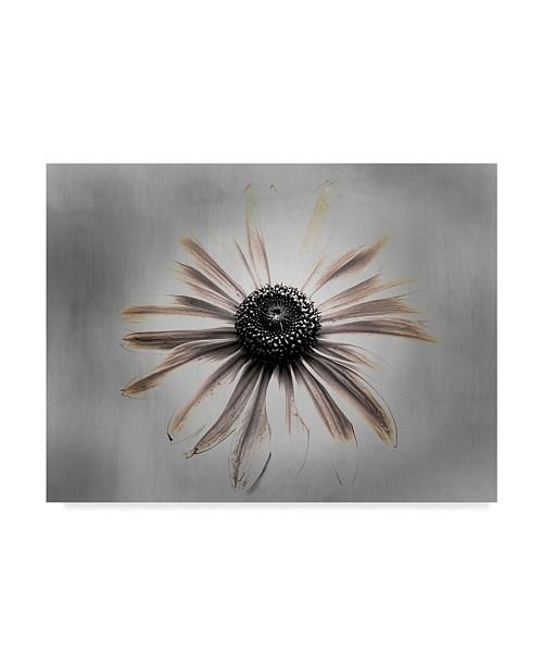 "Trademark Global Lori Hutchison 'Sun Faded' Canvas Art - 32"" x 24"""