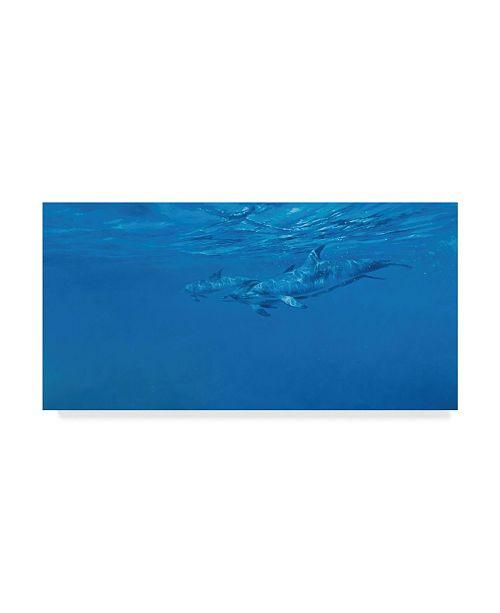 "Trademark Global Michael Jackson 'Dolphins Underwater' Canvas Art - 47"" x 24"""