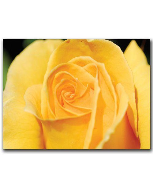 """Trademark Global Yellow Rose Close Up by Kurt Shaffer Canvas Art - 47"""" x 35"""""""