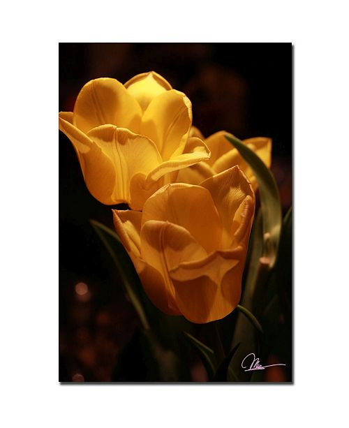 "Trademark Global Martha Guerra 'Two Yellow Tulips Canvas Art - 32"" x 22"""