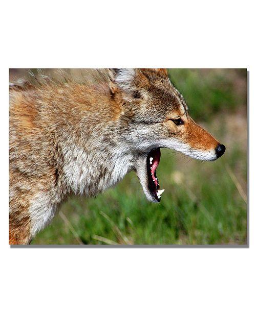 "Trademark Global Nicole Dietz 'Yellowstone Coyote' Canvas Art - 24"" x 18"""