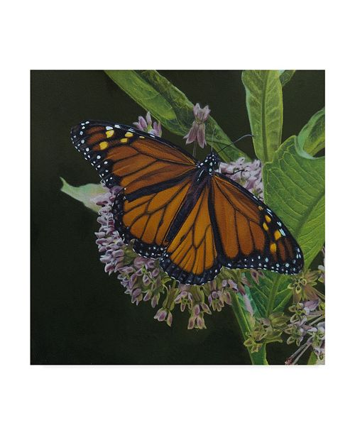 "Trademark Global Rusty Frentner 'Orange Butterfly' Canvas Art - 14"" x 14"""