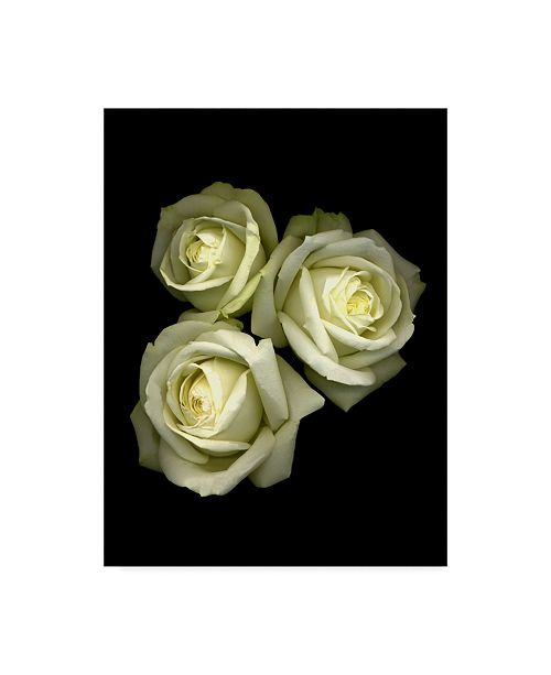 "Trademark Global Susan S. Barmon '3 White Roses' Canvas Art - 24"" x 32"""