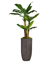 "Laura Ashley 74.25"" Banana Tree Faux decor With Burlap Kit in Resin Planter"