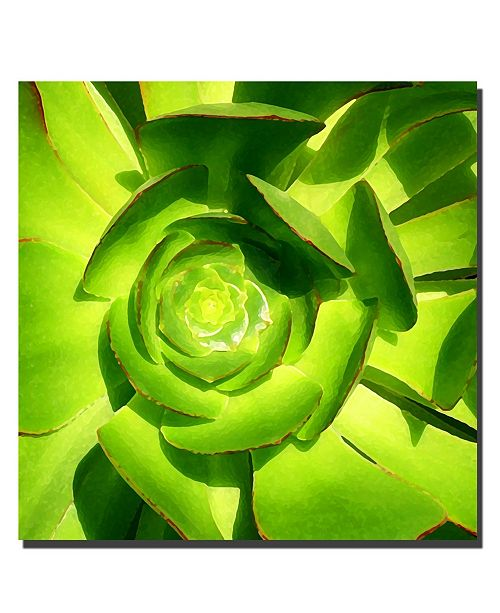 "Trademark Global Succulent Square Close up by Amy Vangsgard Canvas Art - 24"" x 24"""