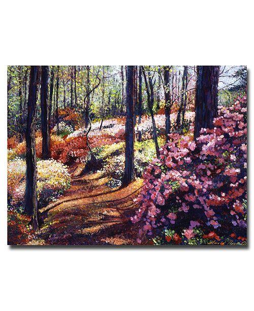 "Trademark Global David Lloyd Glover 'Azalea Forest' Canvas Art - 47"" x 35"""