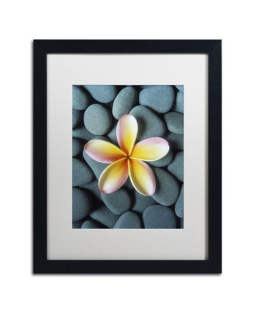 "Trademark Global David Evans 'Plumeria & Pebbles 5' Matted Framed Art - 16"" x 20"""