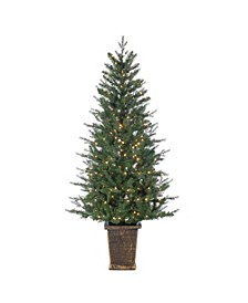 6-Foot High Natural Cut Pre-lit Manitoba Pine in Brown Container