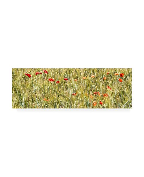 "Trademark Global Philippe Hugonnard France Provence 2 Wheat Field Canvas Art - 19.5"" x 26"""